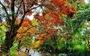 Suối Tà Má rực rỡ hoa trang rừng 'chưa bao giờ đẹp như năm nay'